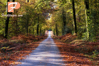 16/10/2020 - Great Escapes - Autumn Passthru Normandie Style