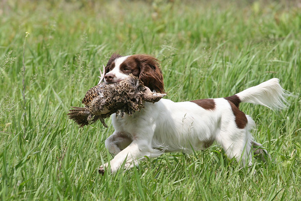 Spaniel Hunt Tests & Field Trials 2004-2010