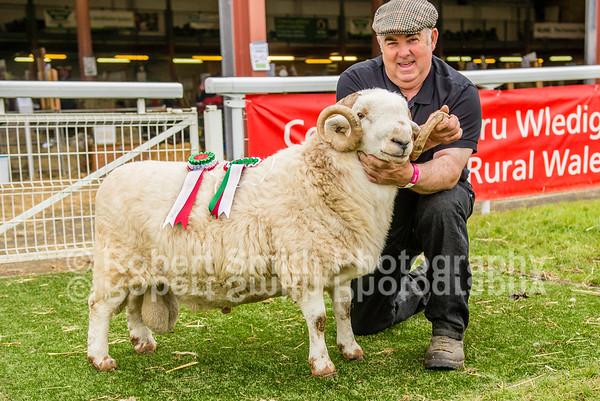 General Photos @Royal Welsh Show 2015