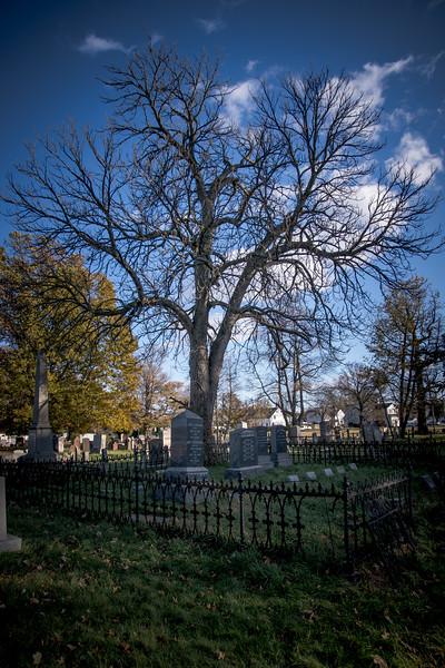 PTown Tree.jpg