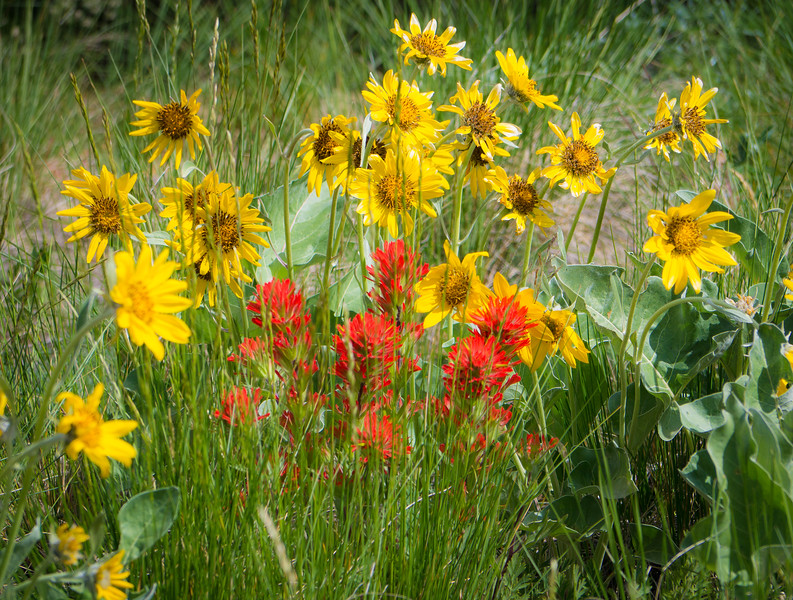 #34 Wildflower Patch