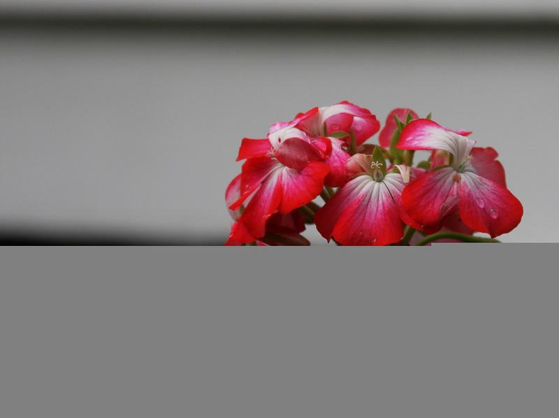 garden (29).jpg