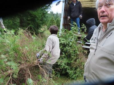 Tree Pickup - Nov 22