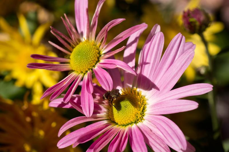 bee in the neighborhood