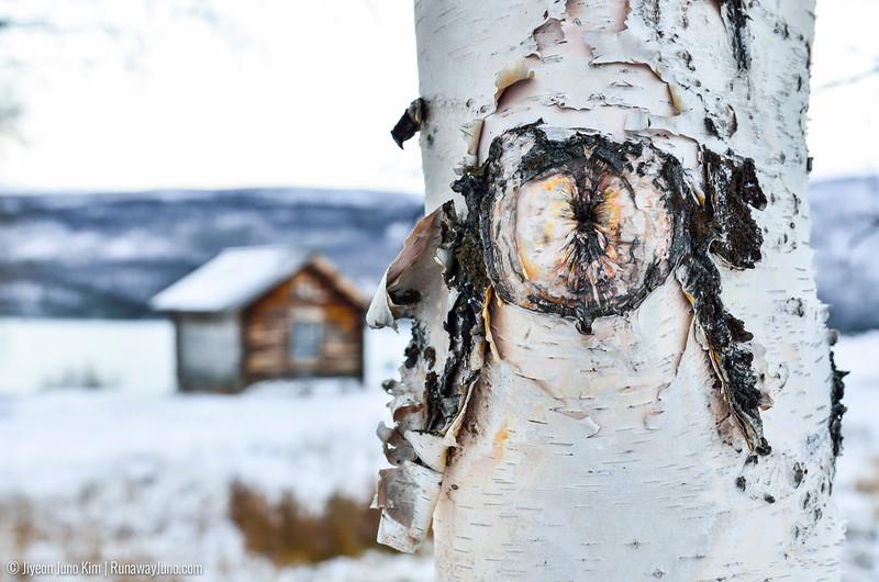 Nov.12_Utsjoki-9937.jpg
