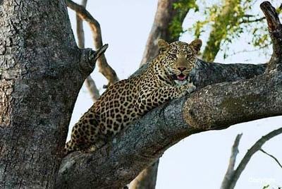 Botzwana  Okavango Delta