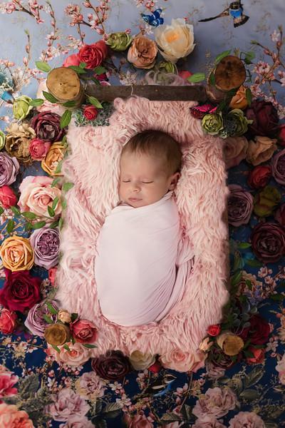 Ellarose - Newborn