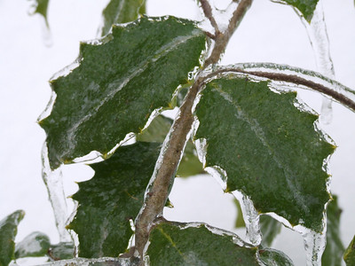 Stock Photography- Ice Storm