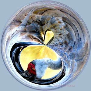 DIGITAL CREATIVE-GOLD-SANDHILL CRANE IN A CIRCLE-PAT JONES