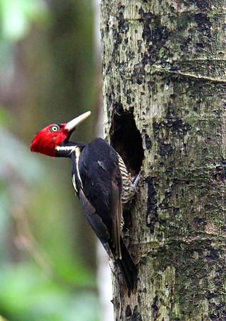 BIRDS  (49 species)