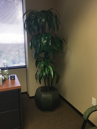 Office Plants 2017