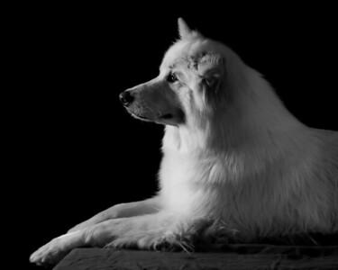 180722 Dog Portraits
