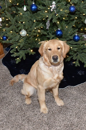 Piper's First Christmas
