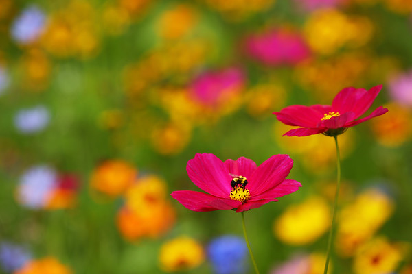 Flowers, Plants, Leaves
