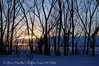 Willows and Sunsets