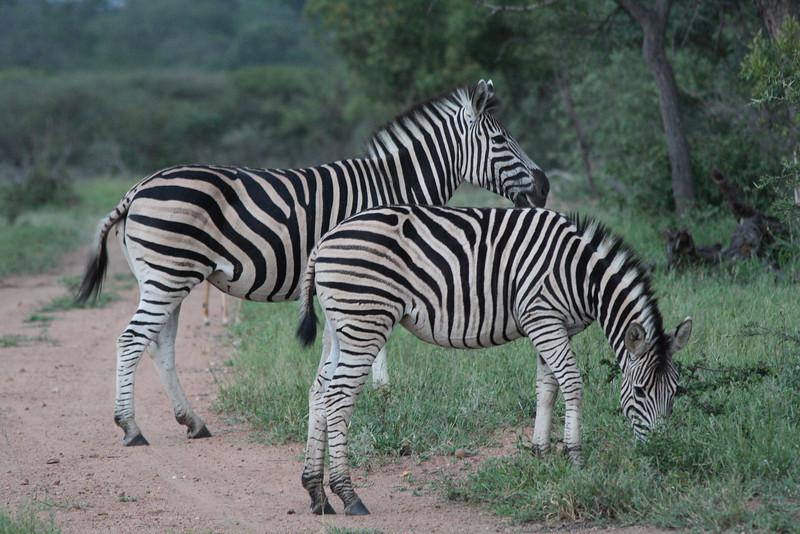 S Africa_S Africa_IMG_2159.JPG