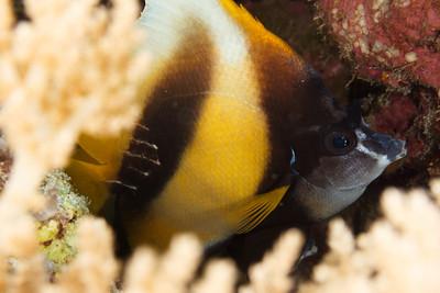 20150323 Dive, Big Gota