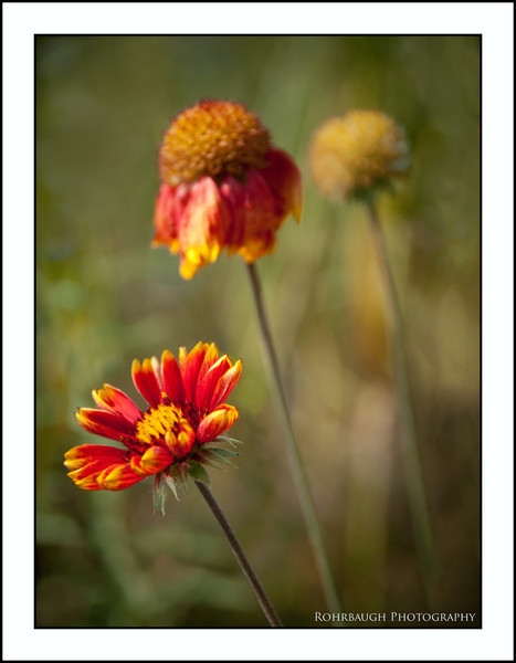 Rohrbaugh Photography Flowers 27.jpg