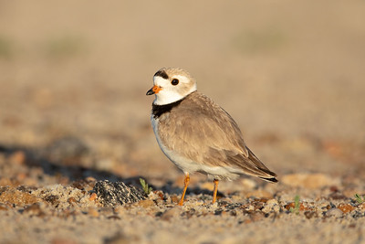 Local Birding 2019