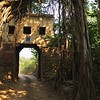 Forest track going through an ancient gate and a Banyan tree in Ranthambore national park, India