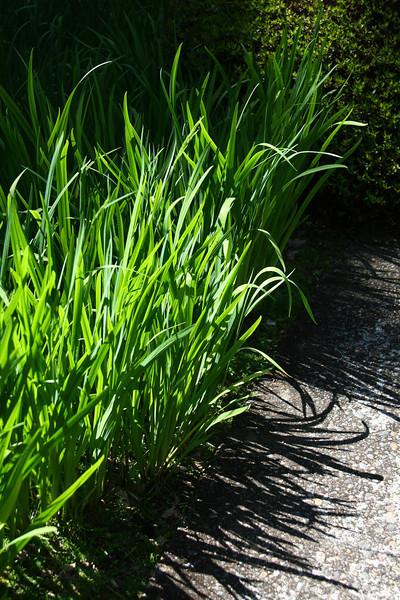 Portland Japanese Garden 6-3-11  1759.jpg