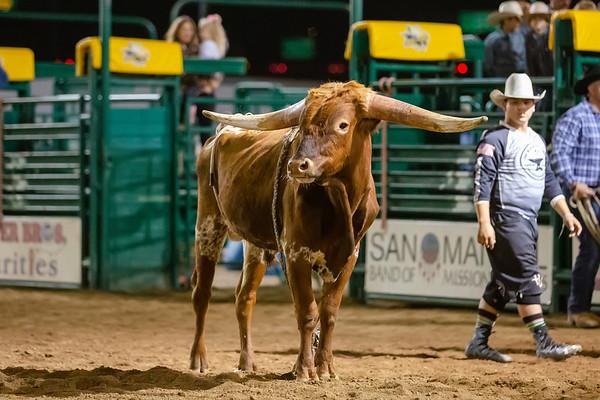 2019 AK Bucking Bulls - San Bernardino