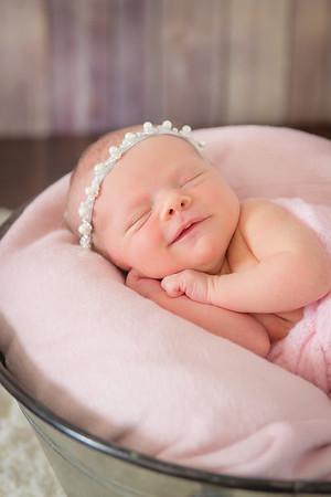Baby Lamb 17