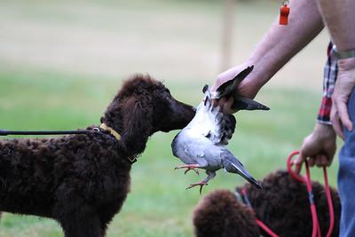 Bird Dog Seminar Aug 24, 2012