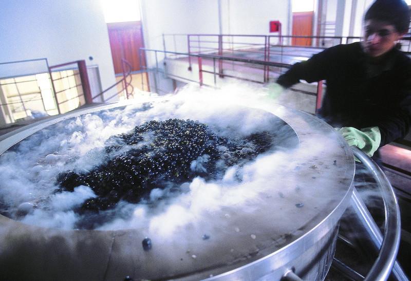 Proceso de fermentación de uva