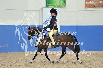Class 17 Sm Show Pony