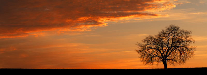 Monocacy Tree at Sunset Pano.jpg