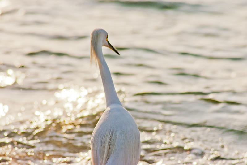 Crane Looking at the Ocean