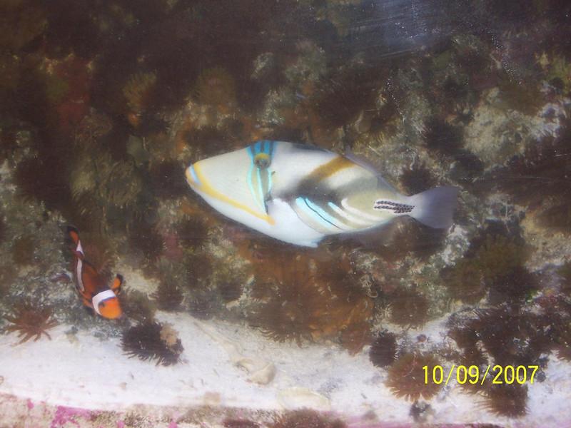 Fishtank 010b.JPG