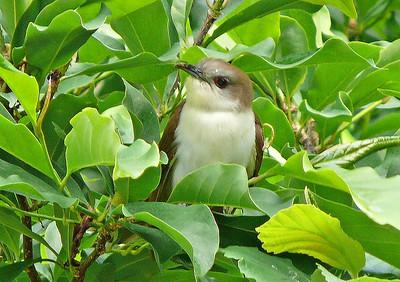 Recent Bird Photos