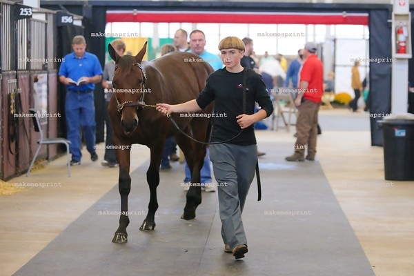 Hoosier Classic Yearling Sale 2016