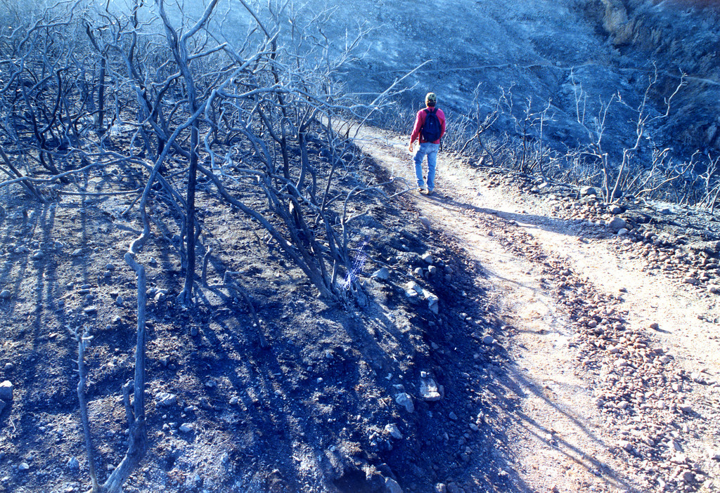 . A solitary hiker walks along the popular, once-lush Mishe Mokwa trail in the Santa Monica Mountains.  (11/2/93)   Los Angeles Daily News file photo