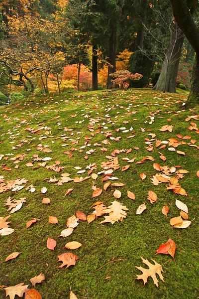 Portland Japanese Garden  11-11-11  3571.jpg
