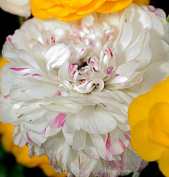 Flowers_000.jpg