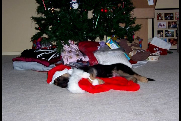 Grohl's first Christmas