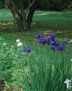 Summer Garden 2008