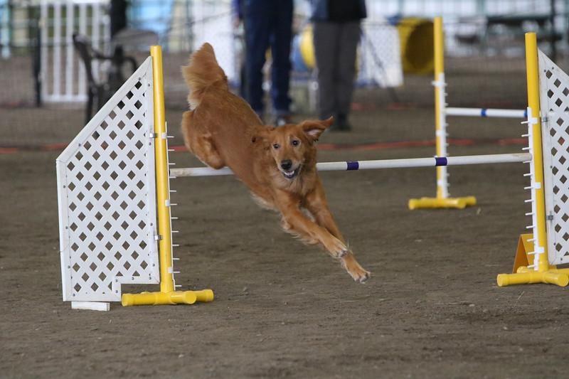 3-10-2019 Bloodhound-0282.jpg