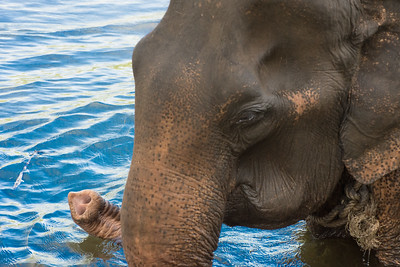 Kanchanaburi (Elephant World)