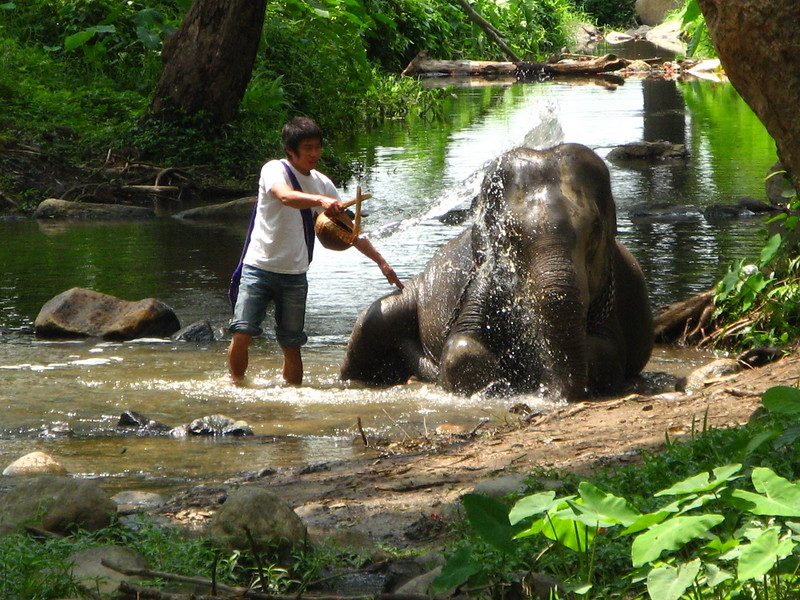 Bathing an elephant at Patara Elephant Experience.
