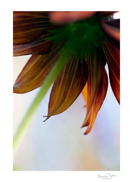 Flower_O9A6604.jpg