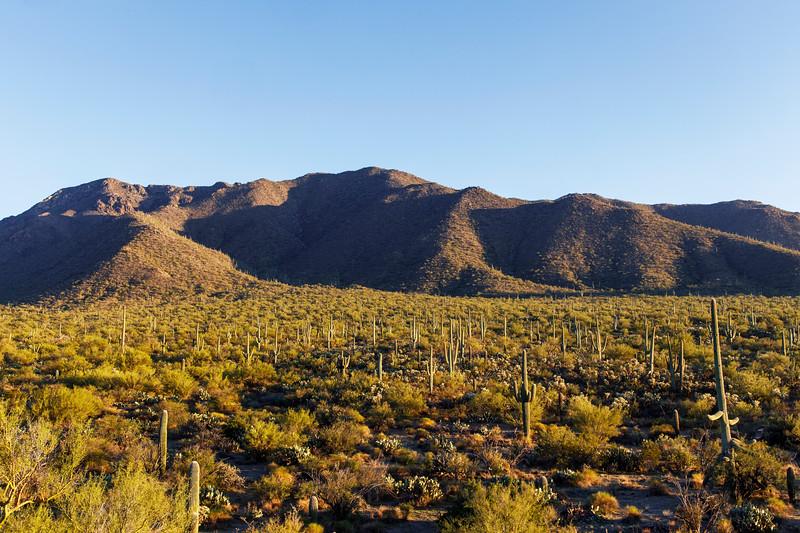 Lush Desert Basking in Afternoon Sunlight