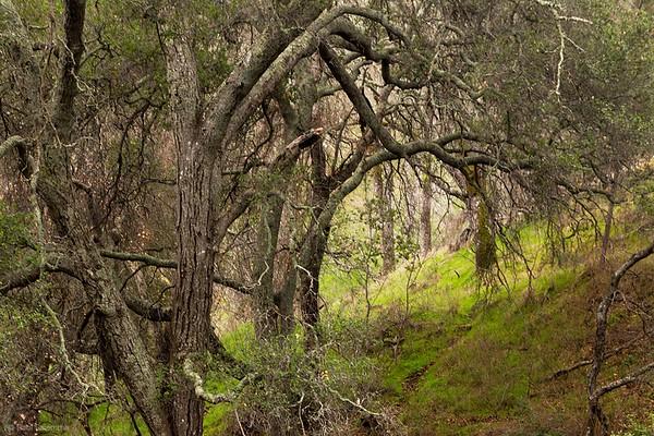 Hike to Olofson Ridge - December 31, 2016