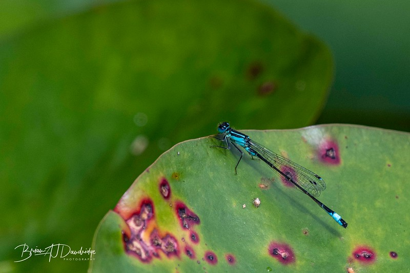 Garden_insectlife-0655.jpg