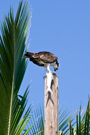 Birds and Wildlife...