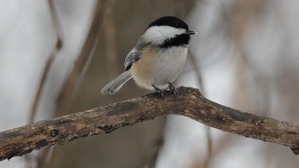 Best Bird Photos