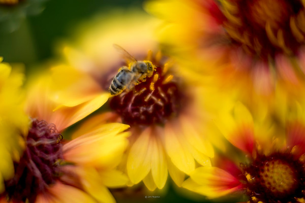 Summer Macro Flowers with a Noctilux